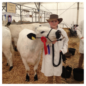 2016-11-18-penningtons-british-white-cattle-5