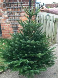 2016-11-22-christmas-tree-arrivals-5
