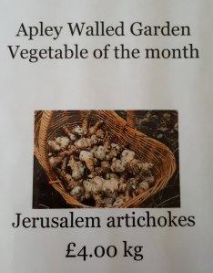 2017-01-19-awg-progress-veg-of-the-month-jerusalem-artichokes
