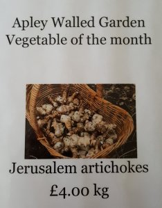 2017-01-19-awg-progress-veg-of-the-month-jerusalem-artichokes