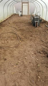 2016-01-24-awg-clearing-polytunnel