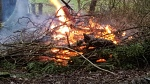 2017-02-07-awg-progress-burning-brambles-clearing