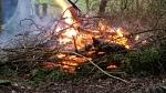 2017-02-07-awg-progress-burning-brambles-clearing