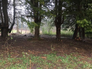 2017-02-15-awg-progress-clearance-under-yew-trees