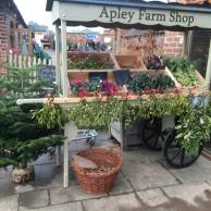 Christmas trees, mistletoe, holly & cyclamen still available